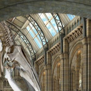 Discover 5 of The Most Amazing New Museums of The World New Museums Discover 5 of The Most Amazing New Museums of The World nhm blue whale 293x293