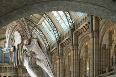 Discover 5 of The Most Amazing New Museums of The World New Museums Discover 5 of The Most Amazing New Museums of The World nhm blue whale 370x247