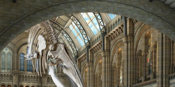 Discover 5 of The Most Amazing New Museums of The World New Museums Discover 5 of The Most Amazing New Museums of The World nhm blue whale 585x293