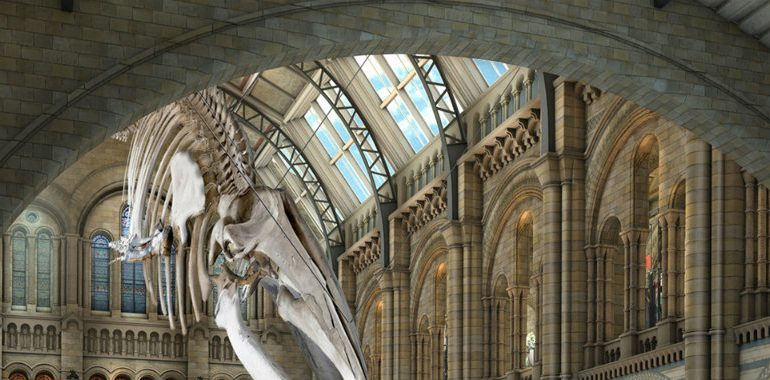 Discover 5 of The Most Amazing New Museums of The World New Museums Discover 5 of The Most Amazing New Museums of The World nhm blue whale 770x380