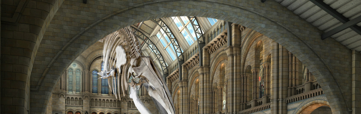 Discover 5 of The Most Amazing New Museums of The World